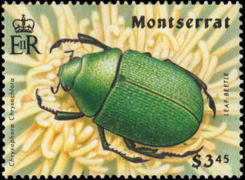 Rutelinae - Chrysophora chrysochlora Latreille (female) - timbre stamp sello estampilla - Monserrat